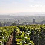 Reims Champagne Vineyard