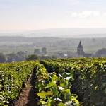 Reims Champagne Vineyard